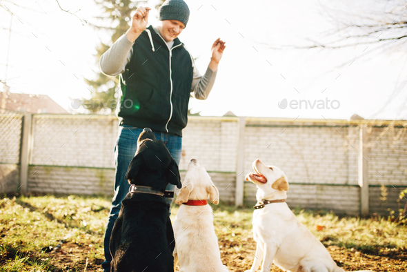 Cynologist works with cop dogs, training outside - Stock Photo - Images