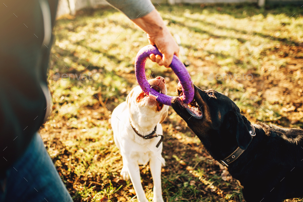 Cynologist works with military dogs outside - Stock Photo - Images