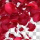Rose Petal Transitions Pack - VideoHive Item for Sale