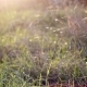 Gnats Above Grass at Sunset - VideoHive Item for Sale
