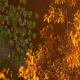 Magic Lake 3 - VideoHive Item for Sale