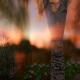 Magic Lake 7 - VideoHive Item for Sale