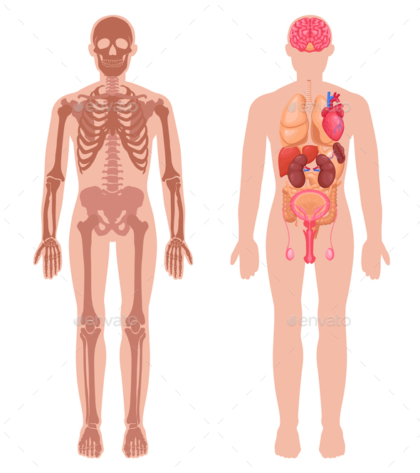 Human Anatomy Set - Miscellaneous Vectors