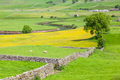 Yorkshire Dales Agricultural Landscape - PhotoDune Item for Sale