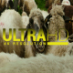 Sheep 6 - VideoHive Item for Sale