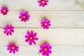 pattern of cosmos flowers - PhotoDune Item for Sale