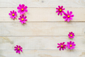 frame of cosmos flowers - PhotoDune Item for Sale