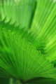 Green palm tree leaf - PhotoDune Item for Sale