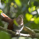 Squirrel Cuckoo in the Forest - PhotoDune Item for Sale