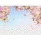 Spring Cherry Blossom - GraphicRiver Item for Sale