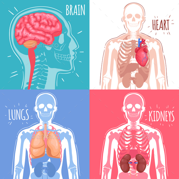 Human Internal Organs Design Concept - Miscellaneous Vectors