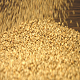 Wheat Grains on a Brown Wooden Background - VideoHive Item for Sale
