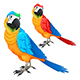 Parrots in Two Different Colors - GraphicRiver Item for Sale