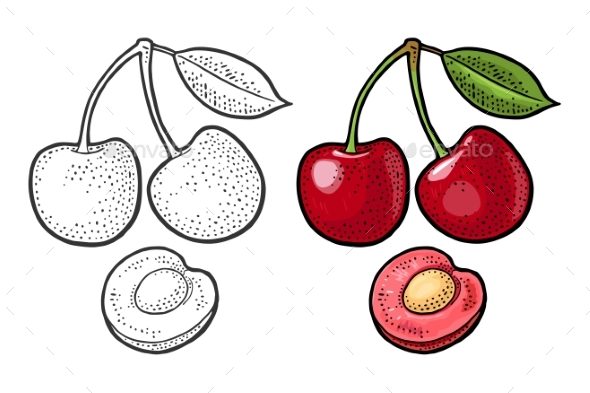 Whole and Half Cherry Berry with Leaf. Vector - Food Objects