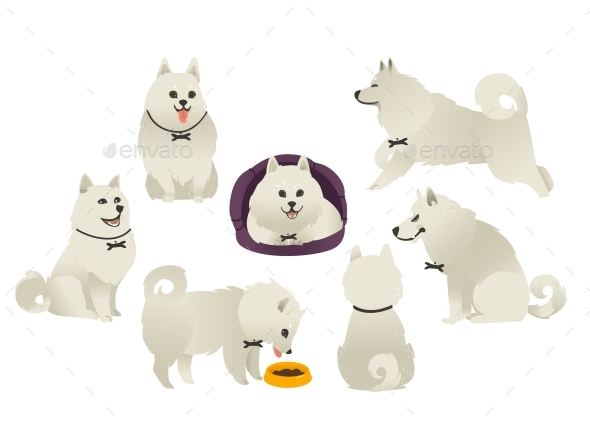 White Fluffy Dog Playing, Sitting, Eating - Animals Characters