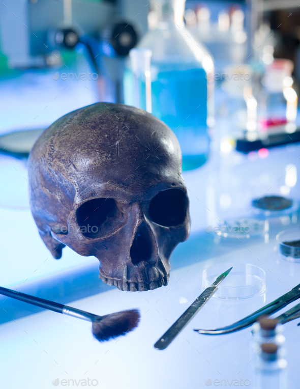 ancient human skull - Stock Photo - Images