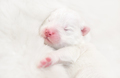Blind newborn white puppy - PhotoDune Item for Sale