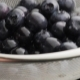Blueberries Are Thrown Upwards - VideoHive Item for Sale