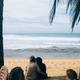 couple sitting under palm trees - PhotoDune Item for Sale