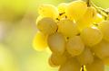 Green grape cluster against sunlight closeup view - PhotoDune Item for Sale
