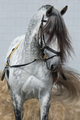 Light gray horse with long dark gray forelock. - PhotoDune Item for Sale