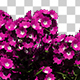 Growing Verbena Flowers - VideoHive Item for Sale