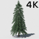 4K Growing Tree - VideoHive Item for Sale