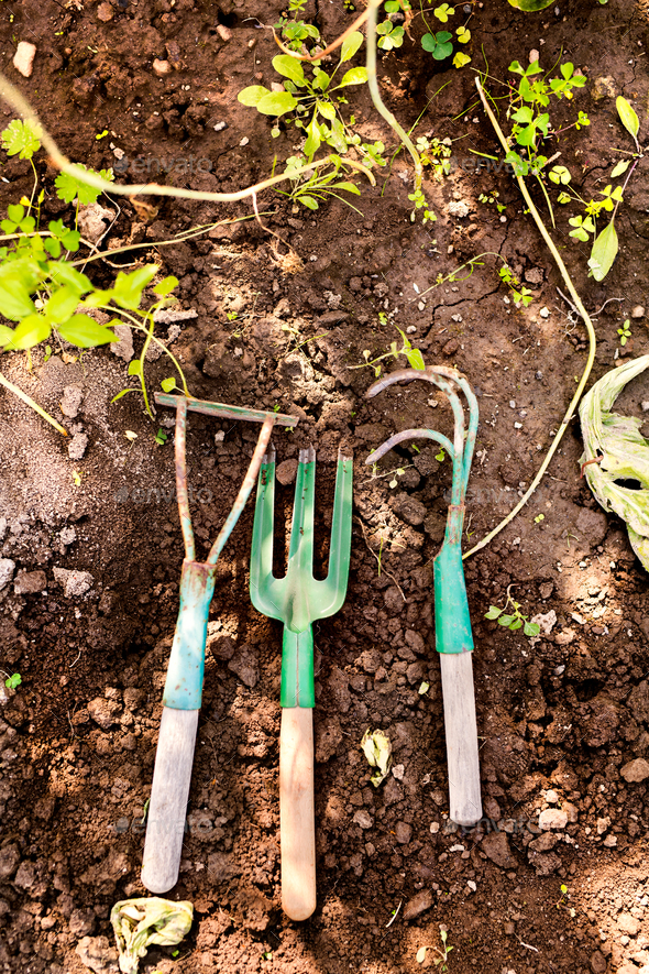 Composition of garden tools in the garden. - Stock Photo - Images