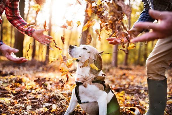 Senior couple with dog on a walk in an autumn forest. - Stock Photo - Images