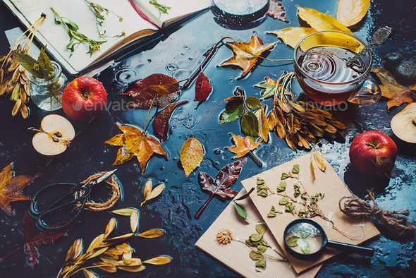 Table with tea cup, autumn leaves, apples and an open notebook with herbs. - Stock Photo - Images