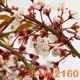 Sunny Spring Morning in Cherry Garden - VideoHive Item for Sale