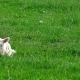 Cute Little Lamb - VideoHive Item for Sale