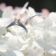 Wedding Rings on a Bouquet of White Flowers Rotating Composition of Wedding Rings and Bouquet of - VideoHive Item for Sale