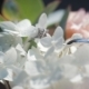 Wedding Rings on a Bouquet of White Flowers - VideoHive Item for Sale