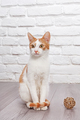 Young red kitten posing - PhotoDune Item for Sale