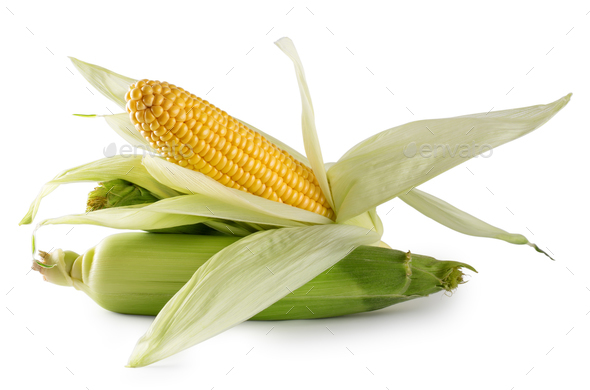 Fresh yellow corn with green leaves - Stock Photo - Images