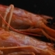 Large Red Shrimps Are Fried in Hot Oil on Pan - VideoHive Item for Sale