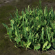 Grass 3D - Realistic - 3DOcean Item for Sale