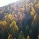 Aerial View of Autumn Pine Forest with Yellow and Green Trees in the Mountains - VideoHive Item for Sale