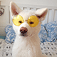 Charly_dog