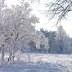 Сharming Tree in Winter Landscape in Snowfall - VideoHive Item for Sale