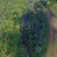 Aerial - Green Wild Swamp - VideoHive Item for Sale