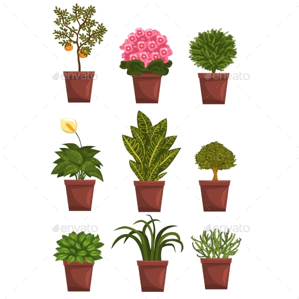 Set of Pot Deciduous, Flowering, Fruit Plants - Flowers & Plants Nature