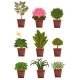 Set of Pot Deciduous, Flowering, Fruit Plants