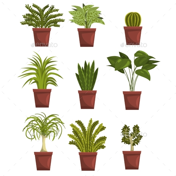 Set of Pot Green Deciduous Plants with Leaves - Flowers & Plants Nature
