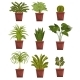 Set of Pot Green Deciduous Plants with Leaves