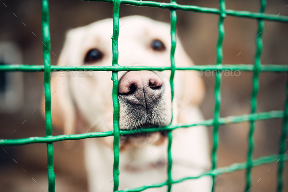 Dog face behind bars, veterinary clinic, no people - Stock Photo - Images