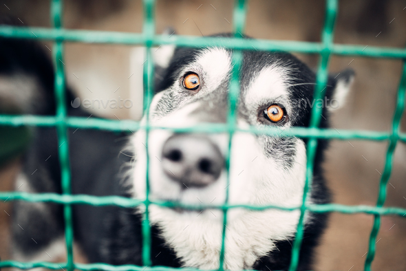 Cute pet face behind bars in veterinary clinic - Stock Photo - Images