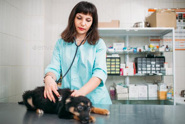 Veterinarian examining dog, veterinary clinic - Stock Photo - Images