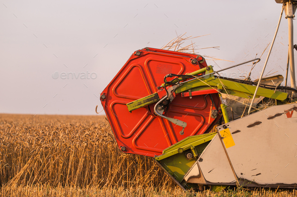 Harvester in wheat field - Stock Photo - Images
